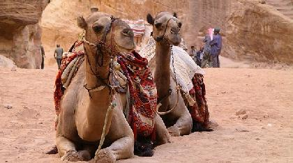 Visitar Turismo En Jordania